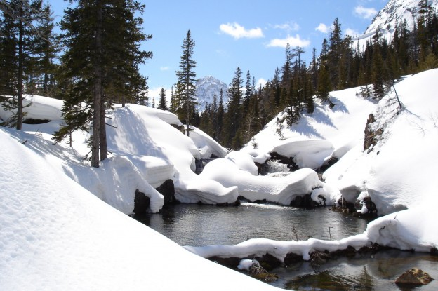Montana's Late Spring