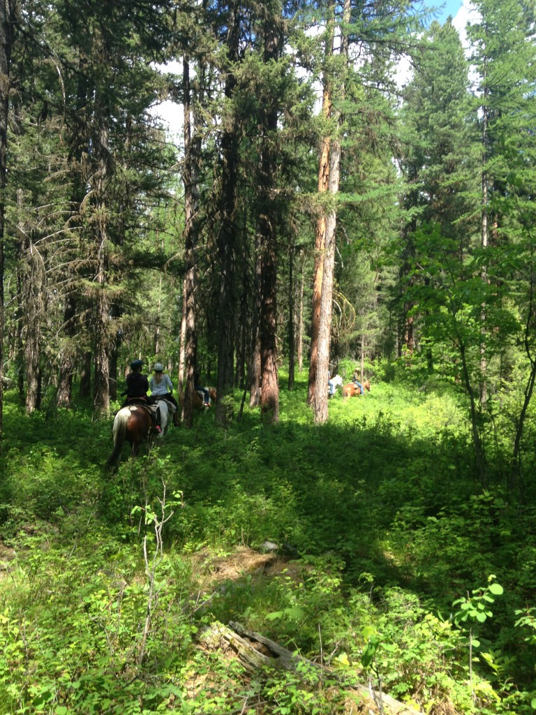 The beginning part of the ride took us through forested terrain.