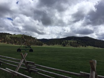 One of the meadows at the ranch.