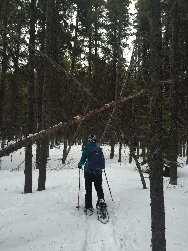 Snowshoeing near Marias Pass in Glacier National Park.