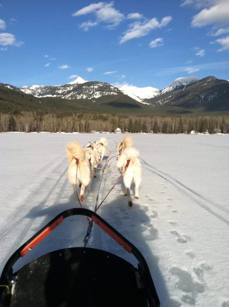 Dog sledding on Swan Lake.