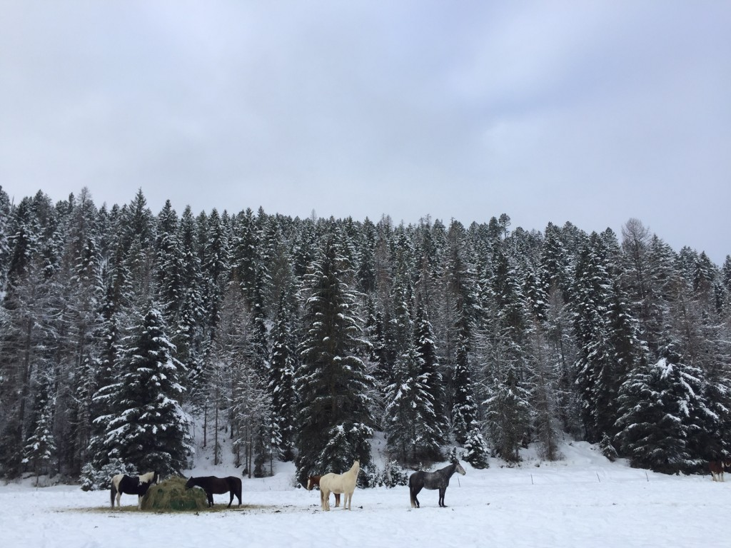 These horses have the winter off.