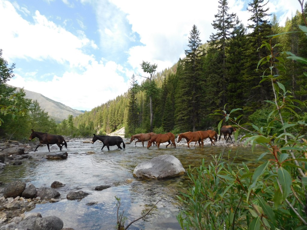 Each morning, a wrangler would go and gather the horses and mules.