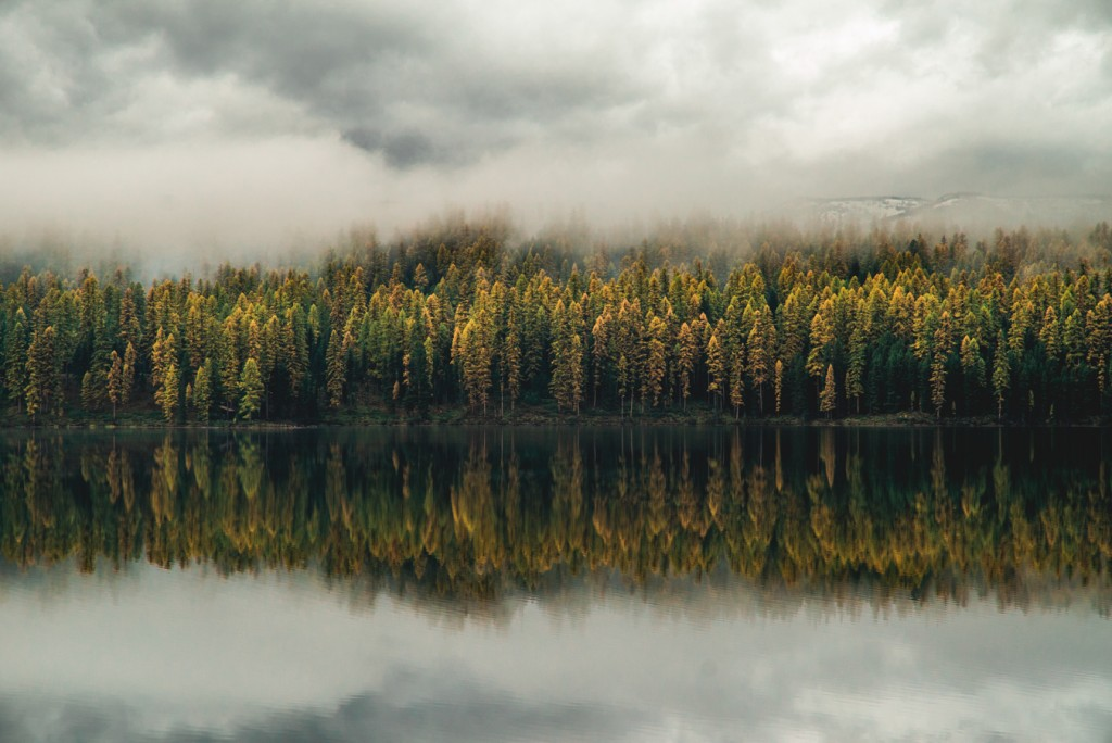 Tamarack trees (and the most beautiful fog I've ever seen) at Salmon Lake State Park.