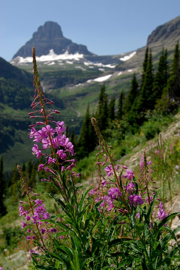 The Brag-Worthy Beauty of Montana's Wildflowers