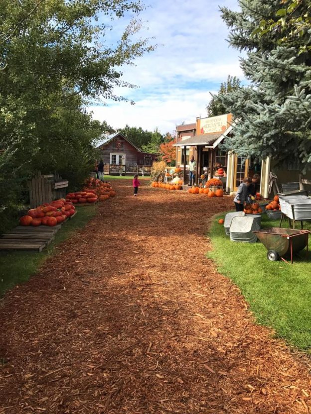 Fall Family Fun: Montana's Harvest Traditions + Halloween Happenings