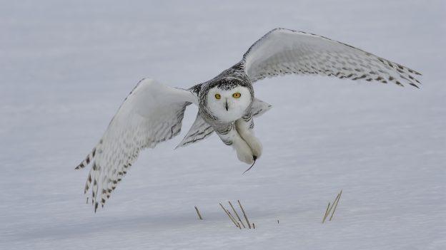 Western Montana Wings: Birding in Glacier Country