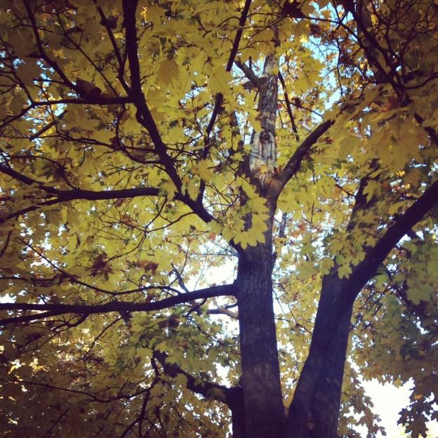 Soaking up Fall in Montana