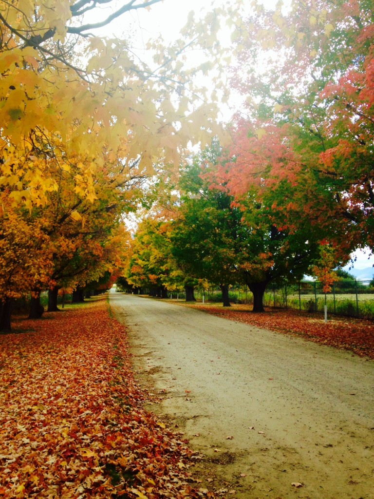 The lane leading up to the Daly Mansion is framed by leaves of gold, yellow, red and orange.