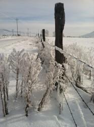 A perfect winter scene along a Montana backroad.