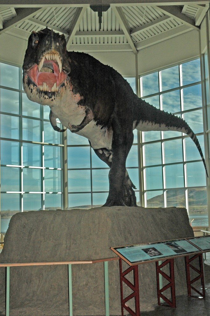 Peck's Rex.