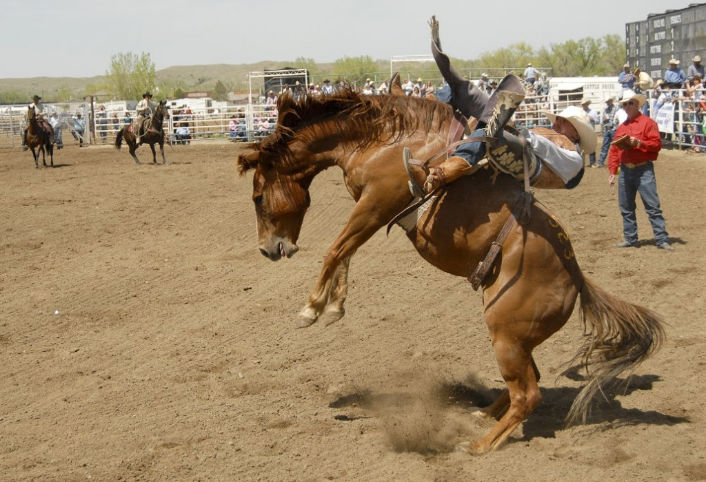 Miles City Bucking Horse Sale.