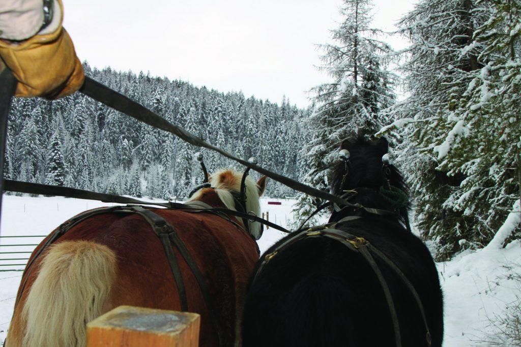 Take me for a sleigh ride.