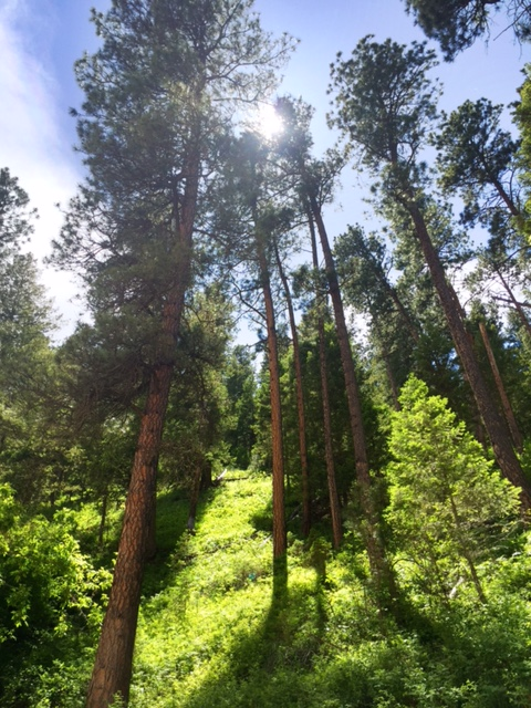 This forest was a quiet oasis in Southeast Montana.