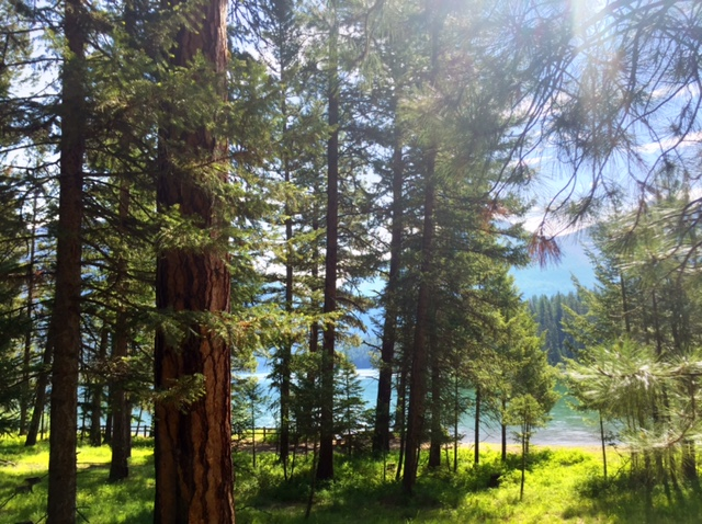 A short drive down Holland Lake Road from Highway 83 will take you to Holland Lake.