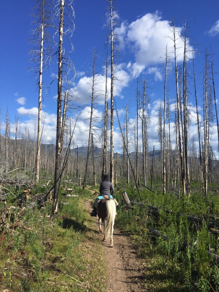 Riding through several miles of forest-fire burn was one of the most vibrant memories from the summer.