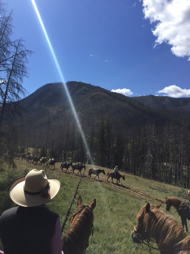 At our mid-morning break, the pack strings passed us. Those mules can MOVE.