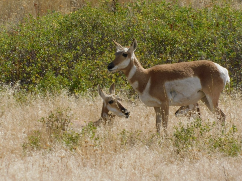 Some antelope, trying to blend in. They stood there motionless.