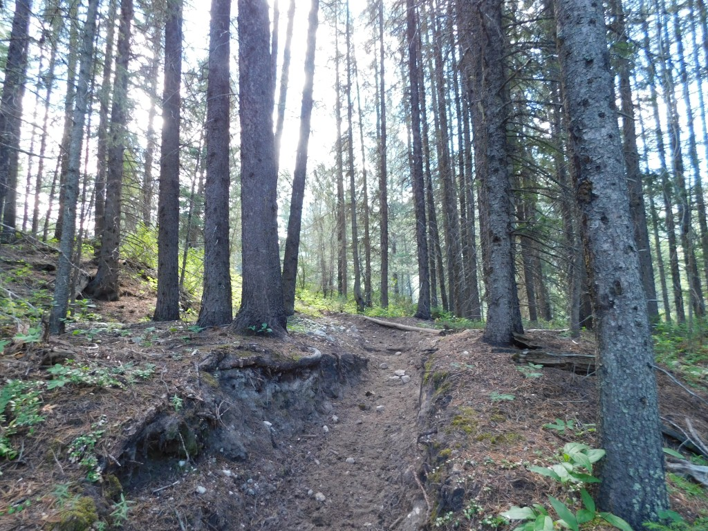 The path from camp down to White River.