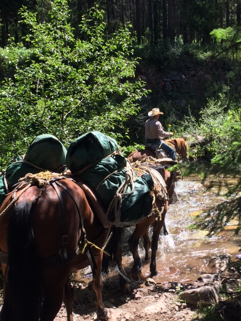 Crossing the creek, with a stop to let the mules drink.
