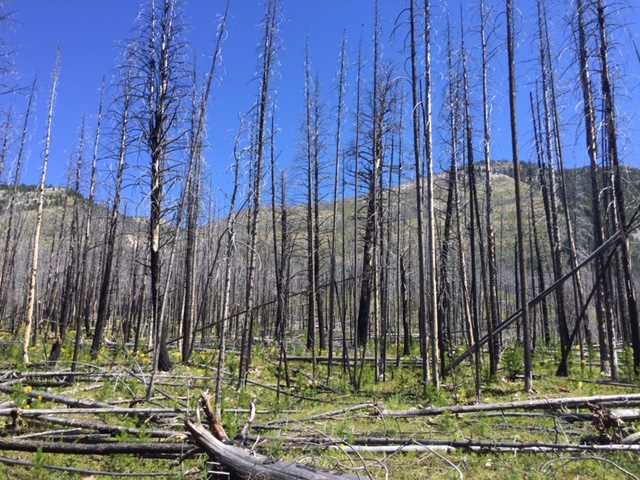 Riding back through an old forest fire. As we made our way through this burnt forest, a wind howled through the trees creating one of the eeriest sounds I've ever heard.