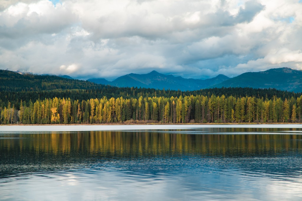 Hands down, the Seeley-Swan Valley is one of the best places to view tamarack trees (AKA western larch).