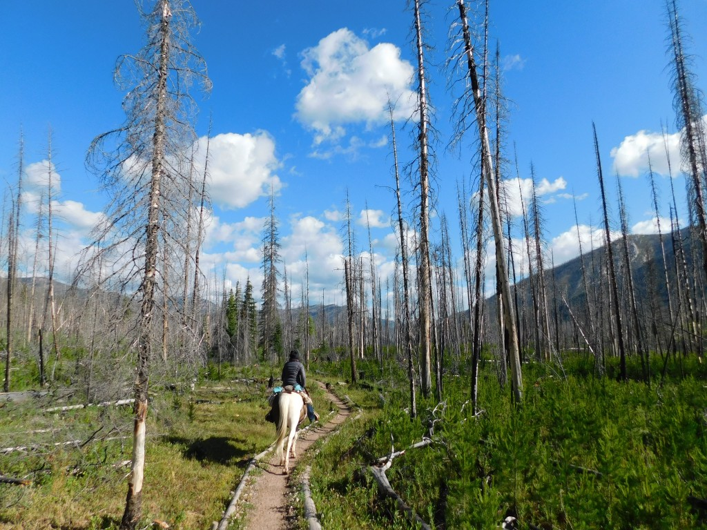 This past summer, I fulfilled a lifelong dream and went on a week-long pack trip into the Bob Marshall Wilderness.