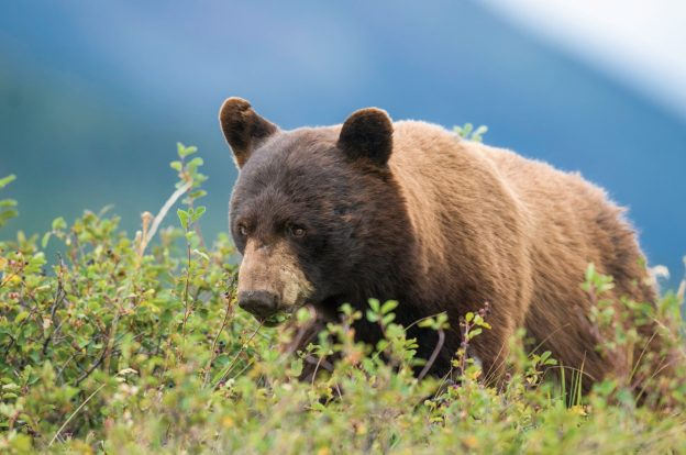 Wild Montana: Enjoy Wildlife Safely and Respectfully