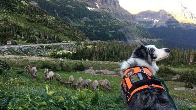 Bark Ranger Gracie Teaches Wildlife Safety