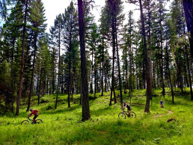 7 Mountain Bike Trails to Explore in Glacier Country