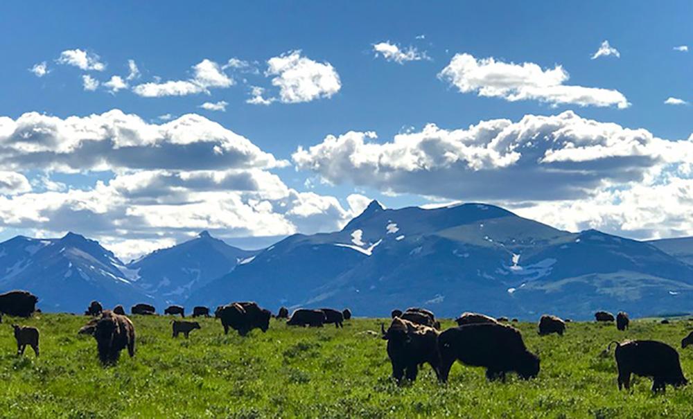 Western Montana Wildland Fire and Smoke Update