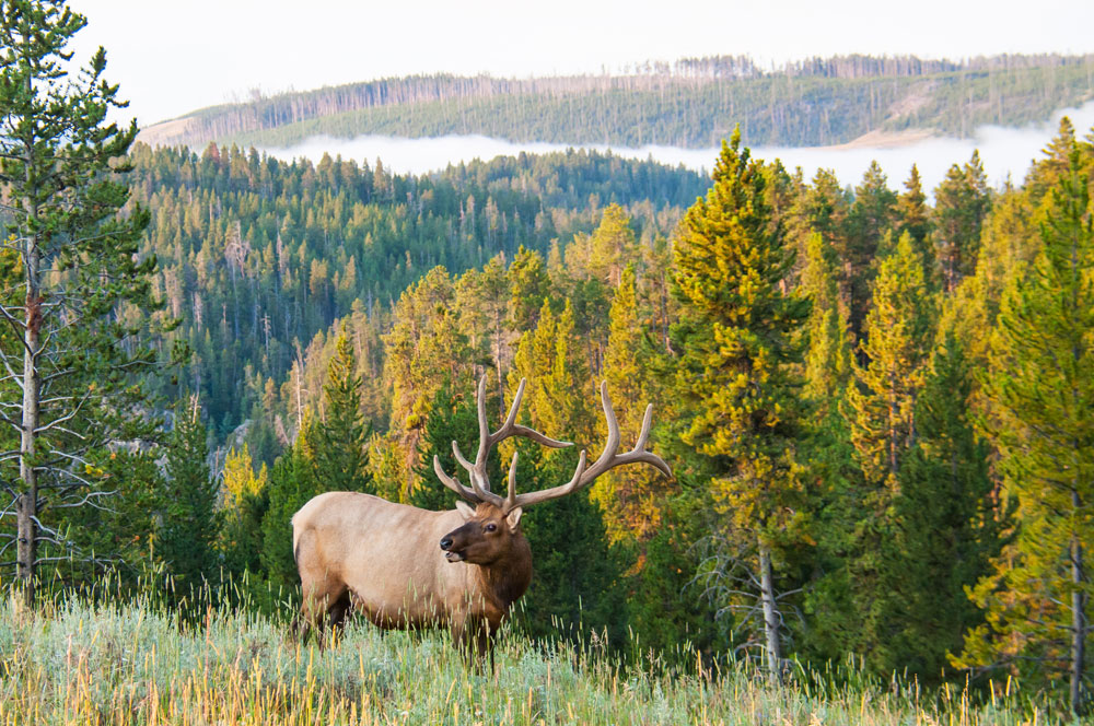 Hunting Outfitters in Western Montana